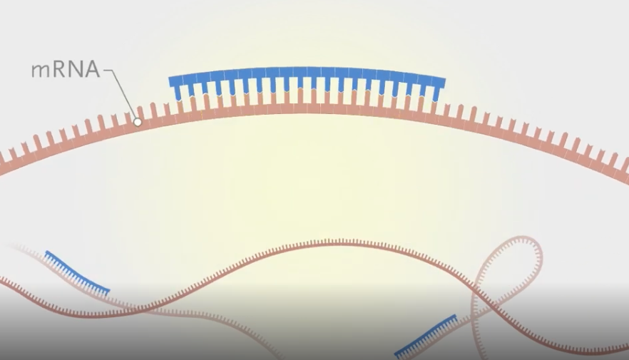 Treating Disease by Manipulating RNA | Videos