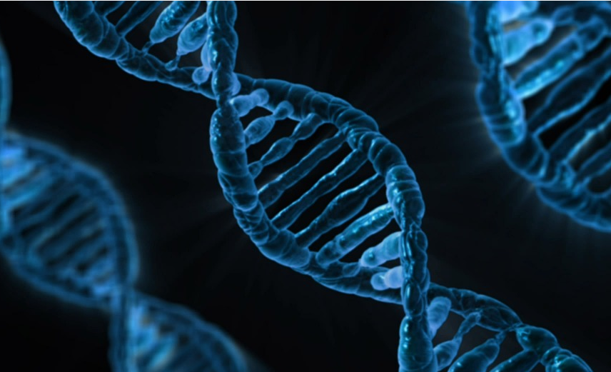 Dna Timisoara Detail: Digging Into The Details Of DNA Replication