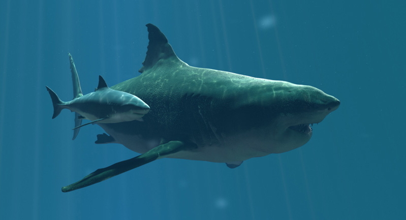 Did scientists find the worlds first great white shark nurs the discovery of a possible great white shark nursery off of the coast of long island publicscrutiny Gallery