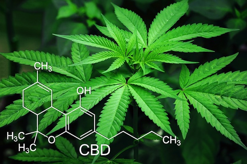 Buy cannabis Toronto