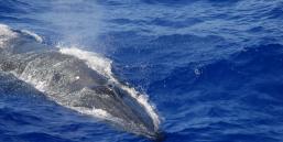 Do Jellyfish Sleep?   Plants And Animals