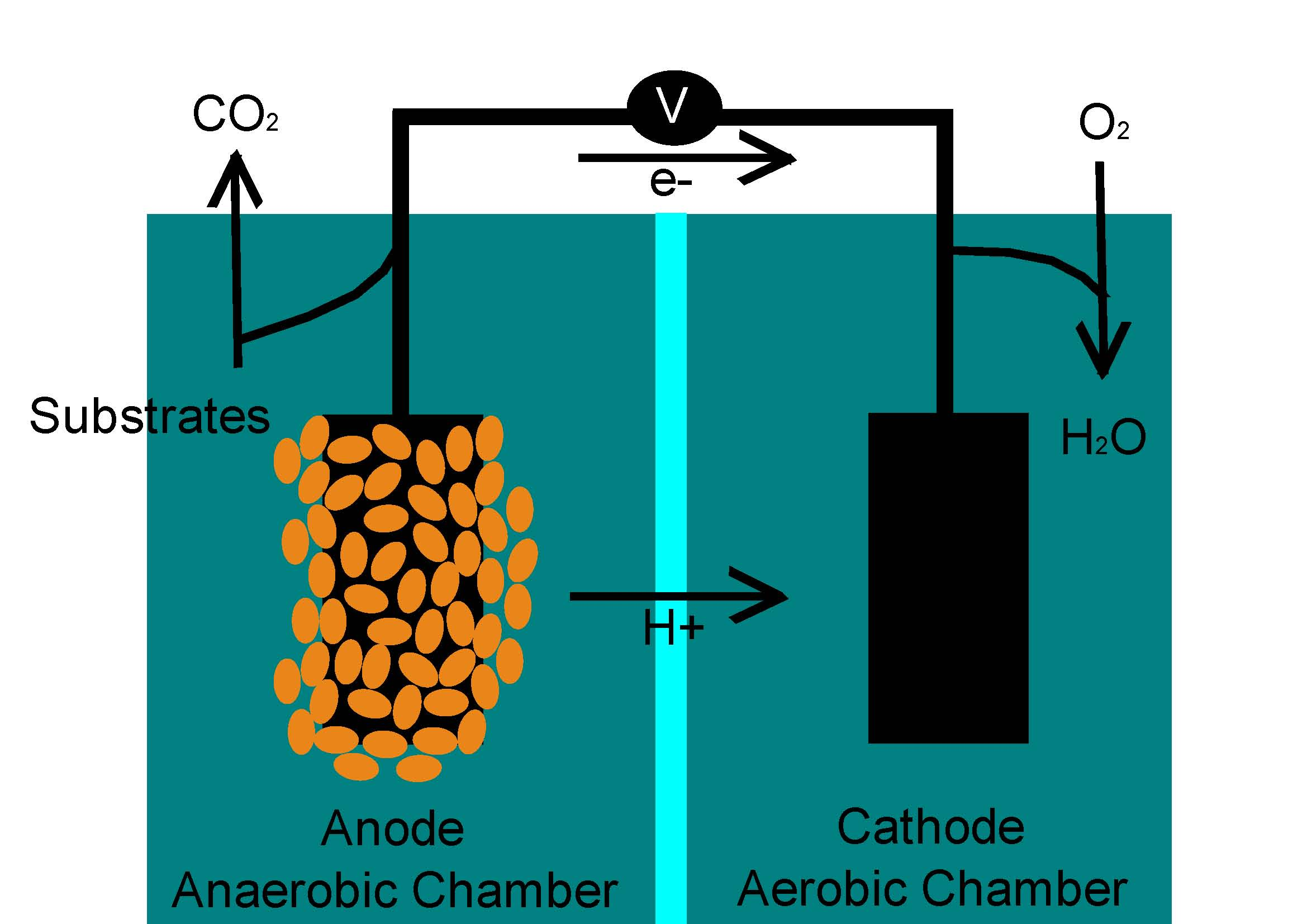 content_article_profile_image_a6578077a6c74033a58b02227aa5a6e49595e4fd_4840 turning methane into electricity with bacteria earth and the