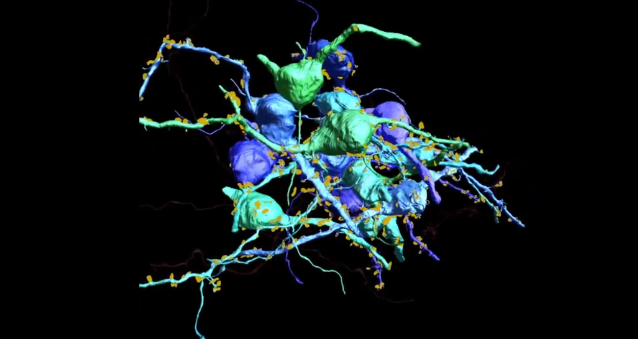 New Technique Can Trace the Activity of Individual Neurons