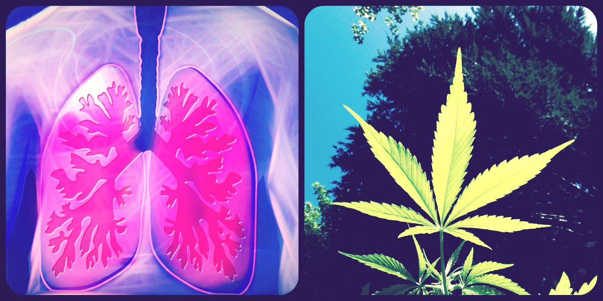 Cannabis Slows Lung Cancer in Mice | Cancer
