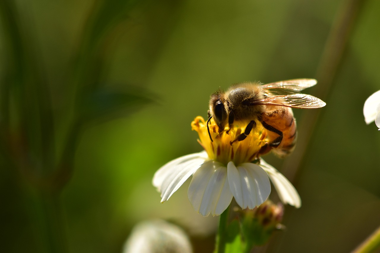 Are Honeybees Making a Comeback in the US? | Plants And Animals