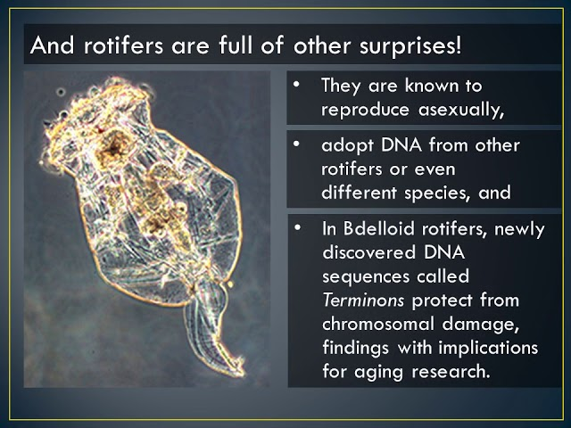 Rotifers asexual reproduction video