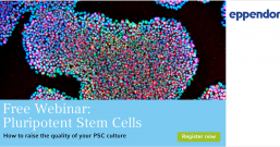 Researchers Surprised to Find a Reservoir of Blood Cells in the Gut   Cell And Molecular Biology